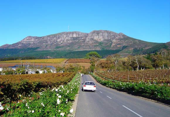 Luxe rondreis Zuid-Afrika: de wijnlanden - AmbianceTravel