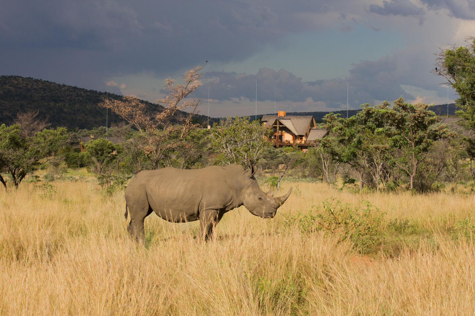 17-daagse rondreis Zuid-Afrika: kies! | AmbianceTravel