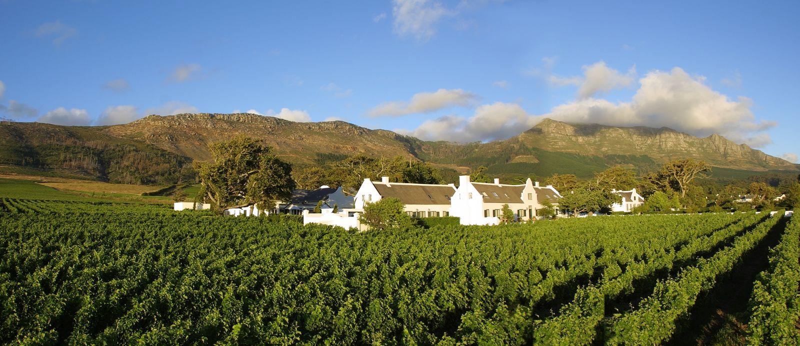 Culinaire tips voor verblijf in Stellenbosch - AmbianceTravel