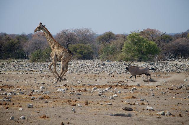 Rondreis Namibie Etosha National Park wildlife