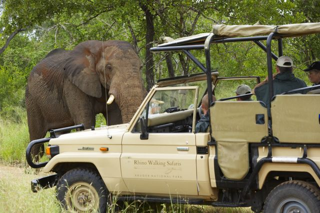 Rondreis zuid-afrika Kruger park Rhino Walking safaris