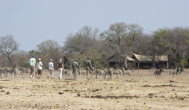 rondreis zuid-afrika Kruger Park Plains Camp Walking safari's wandelsafari