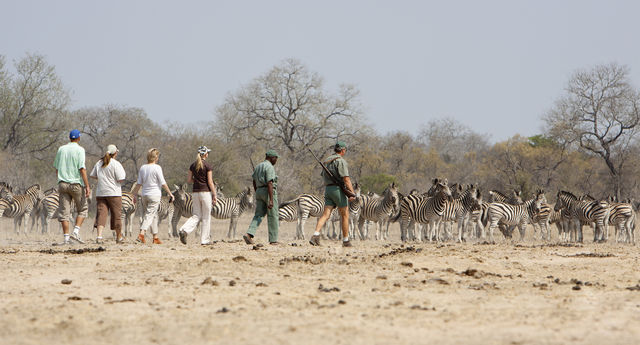 Rondreis Zuid-Afrika Walking safari's