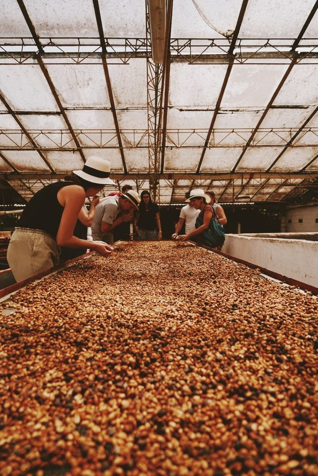 Rondreis Colombia Quindio Manizales Hacienda Venecia bonen sorteren tijdens koffie workshop