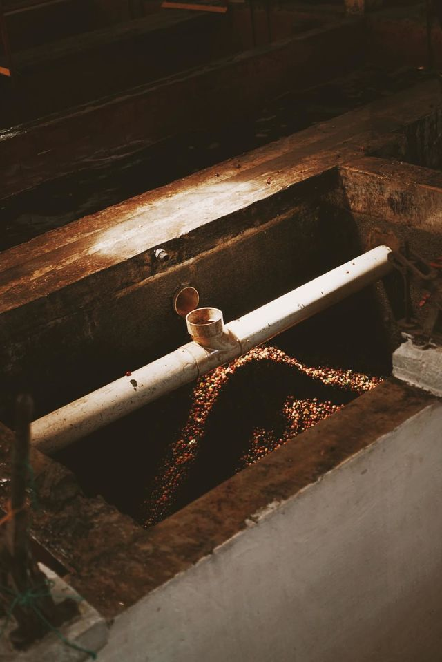 Rondreis Colombia Quindio Manizales Hacienda Venecia detail koffie proces