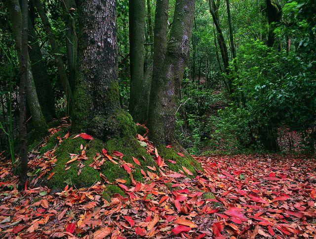 Rondreis Islandhoppen Canarische Eilanden La Gomera Nationale Park van Garajonay