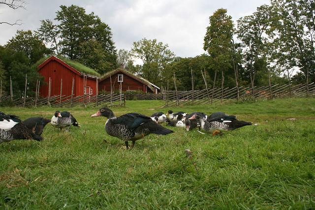 Möckelsnäs Herrgård Diö boerderij eenden