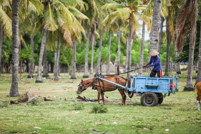 Boer Gili Trawangan Indonesië