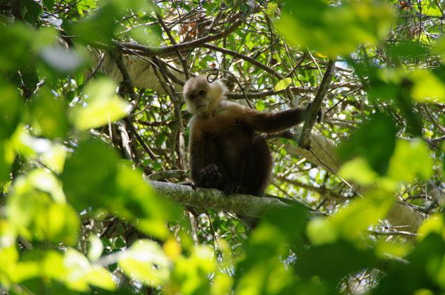 Rondreis Colombia Magdalena Tayrona National Park aapje
