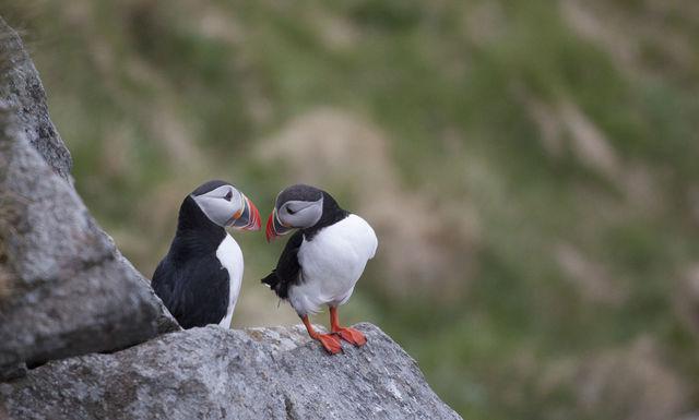 Vogels Ålesund Sunnmøre Noorwegen