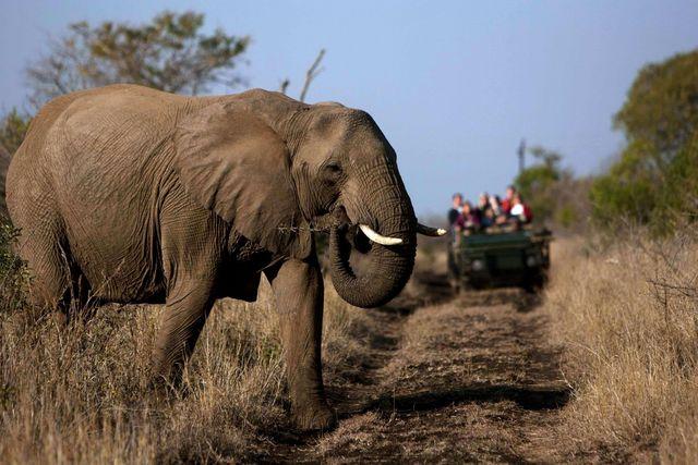 Rondreis Zuid-Afrika Amakoshi Game Reserve olifant
