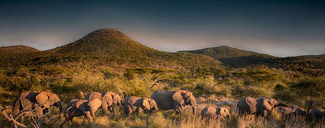 Rondreis Zuid-Afrika Amakoshi Game Reserve olifanten