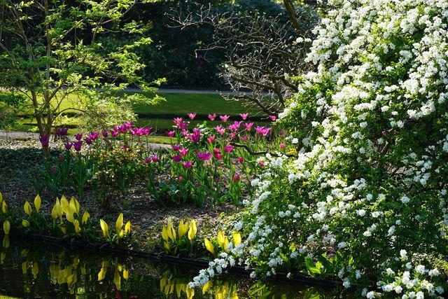 Arboretum Trompenburg Exochorda en Tulpen Rotterdam