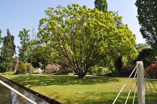 Arboretum Trompenburg Quercus Rotterdam