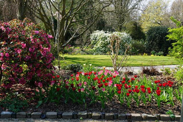 Arboretum Trompenburg Rozen