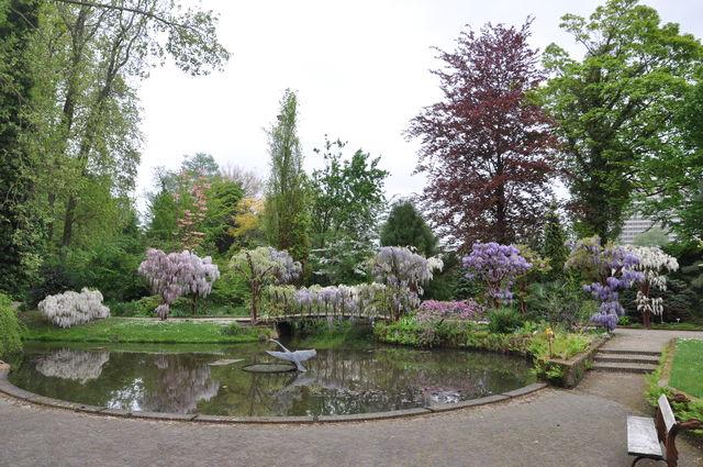 Arboretum Trompenburg Zwanenmeer Rotterdam