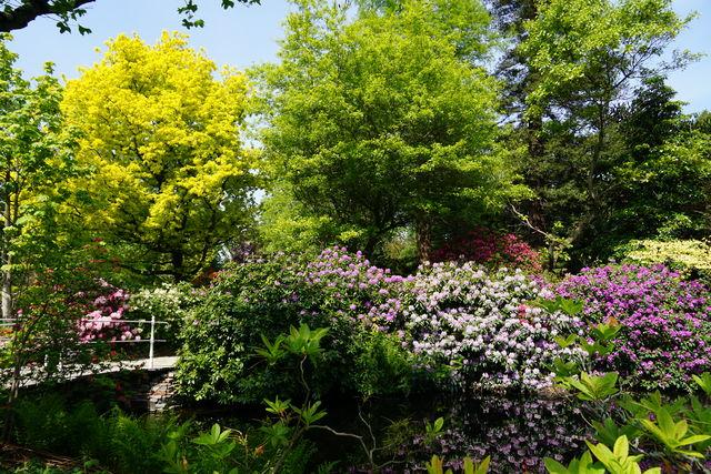 Arboretum Trompenburg Struik Rotterdam