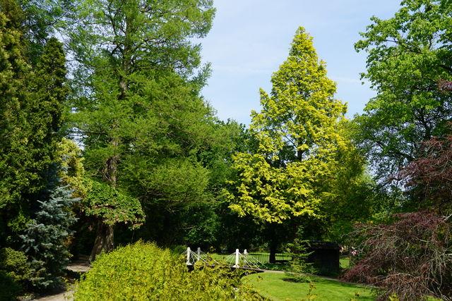 Arboretum Trompenburg Metasequoia Rotterdam