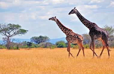 Safari rondreis Tanzania Arusha