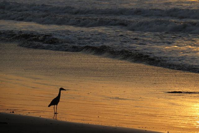 Rondreis Colombia Choco Nuqui El Cantil Ecolodge steltloper op het strand