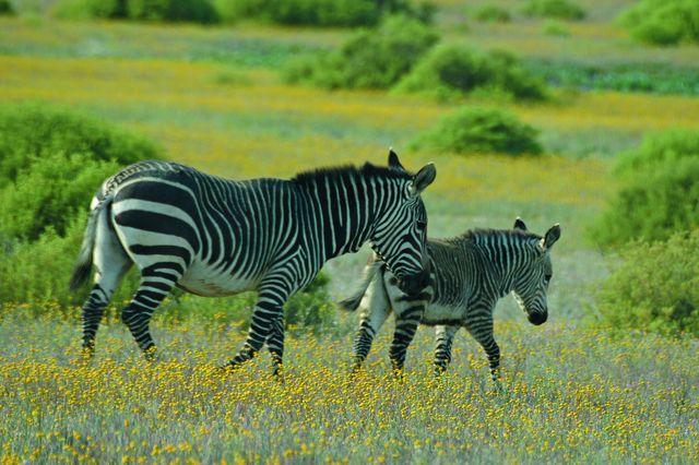 De onbekende Kaap - Luxe | AmbianceTravel