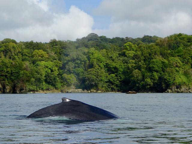 Rondreis Colombia Choco Nuqui El Cantil Ecolodge dolfijnen voor de kust
