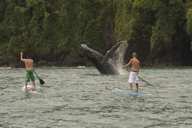 Rondreis Colombia Choco Nuqui El Cantil Ecolodge spelevaren tussen de walvissen