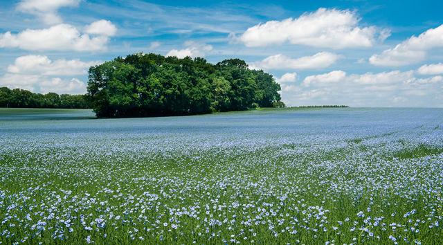 Bloemenveld Haspengouw België