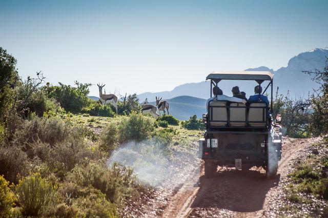 rondreis Zuid-Afrika Oudtshoorn Buffelsdrift game drive