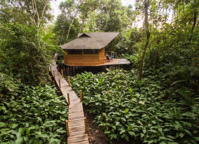 Rondreis Colombia Meta La Macarena La Manigua Lodge een cabana omringd door groen