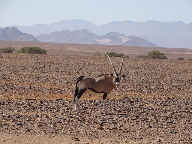 Rondreis Namibie, onderweg naar Swakopmund