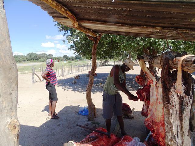 Wildparken in Botswana, inividuele rondreis | AmbianceTravel
