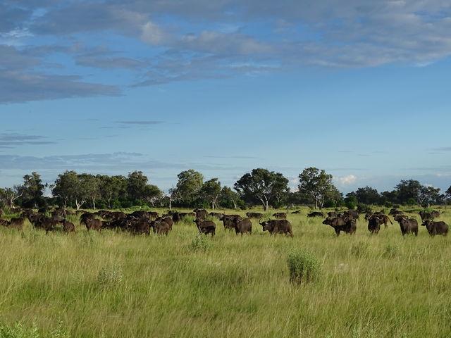 Rondreis Botswana Okavango Delta