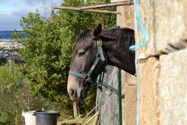 Quinta da Mata Chaves paard