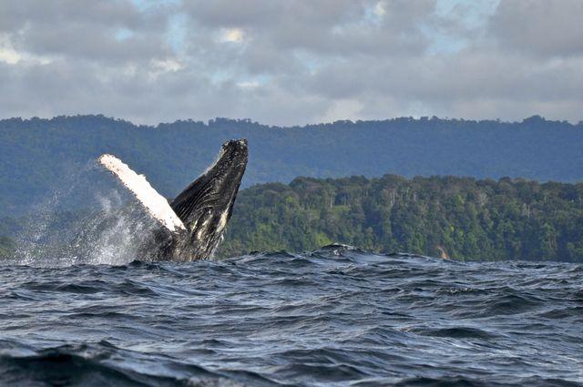 Rondreis Colombia Choco Nuqui El Cantil Ecolodge walvissen spotten