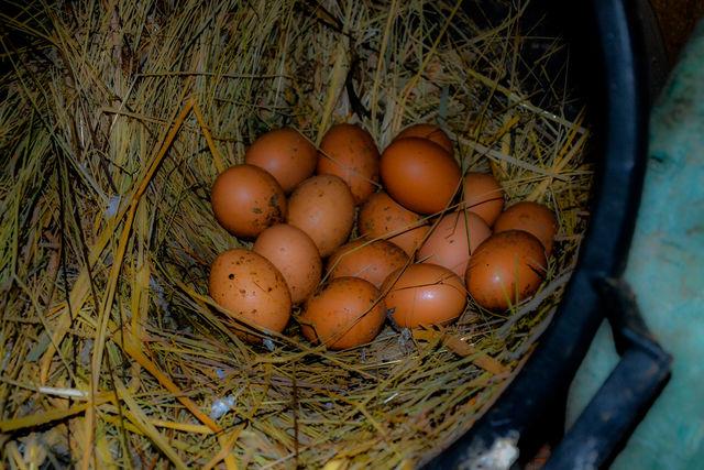 Quinta da Mata Chaves verse eieren