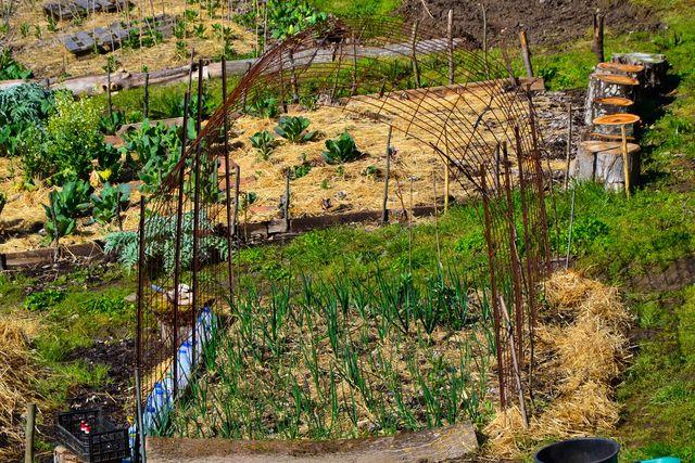 Quinta da Mata Chaves tuin