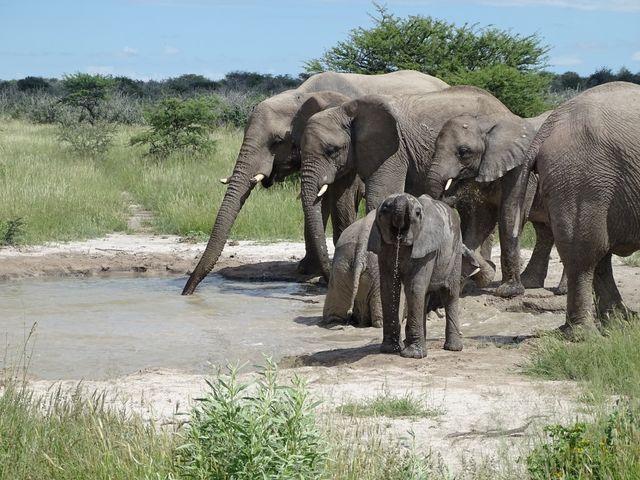 Rondreis Namibie, Etosha Onguma