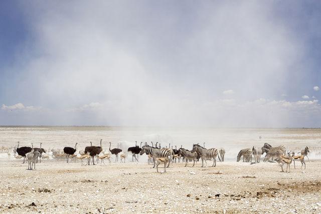 Rondreis Namibië Etosha