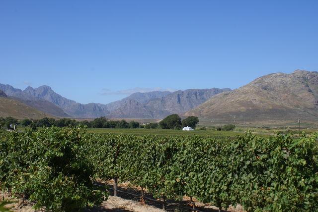 rondreis zuid-afrika franschhoek wijnvelden