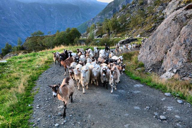 Flåm Vestland Noorwegen