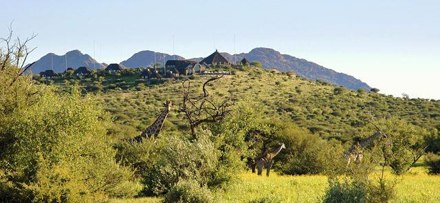 Rondreis Namibie Gocheganas giraffen