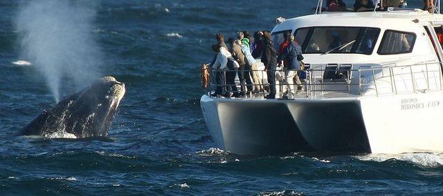 rondreis zuid-afrika hermanus walvis cruise