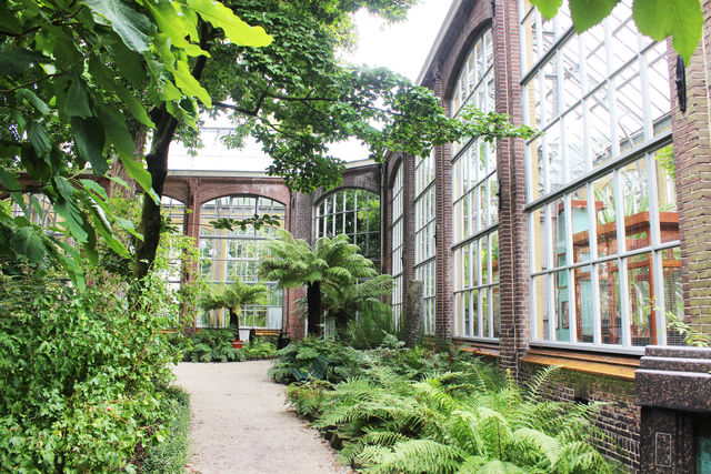 Hortus Botanicus Paadjeskas Amsterdam