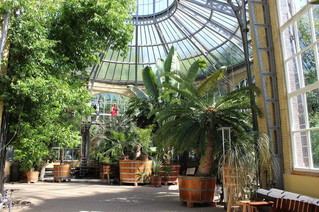 Hortus Botanicus Palmenkas Amsterdam
