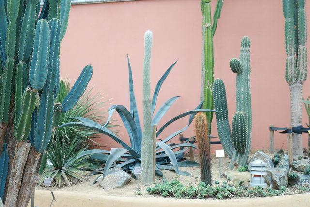 Hortus Botanicus Woestijnkas Amsterdam