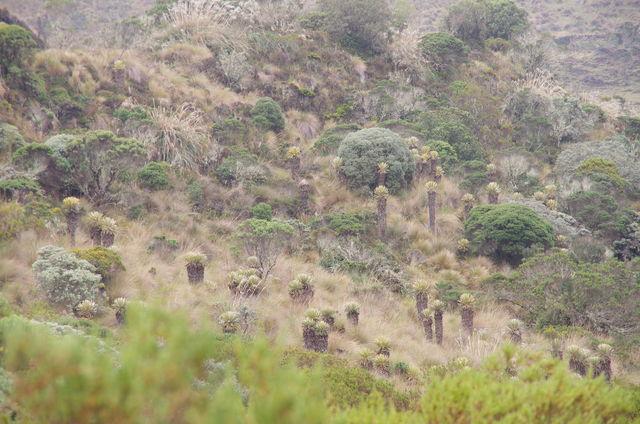 Rondreis Colombia Quindio Los Nevados National Park yuca's in de bergen