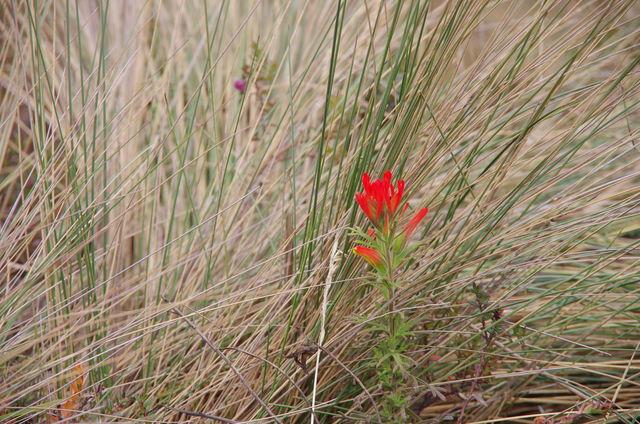 Rondreis Colombia Quindio Los Nevados National Park bloemen in alle kleuren