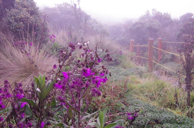 Rondreis Colombia Quindio Los Nevados National Park met paarse bloemen