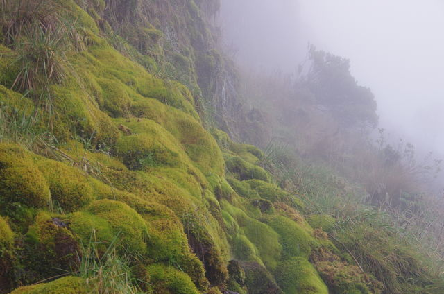 Rondreis Colombia Quindio Los Nevados National Park bodembedekker in de mist